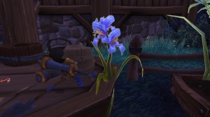 Orchidée de Talador